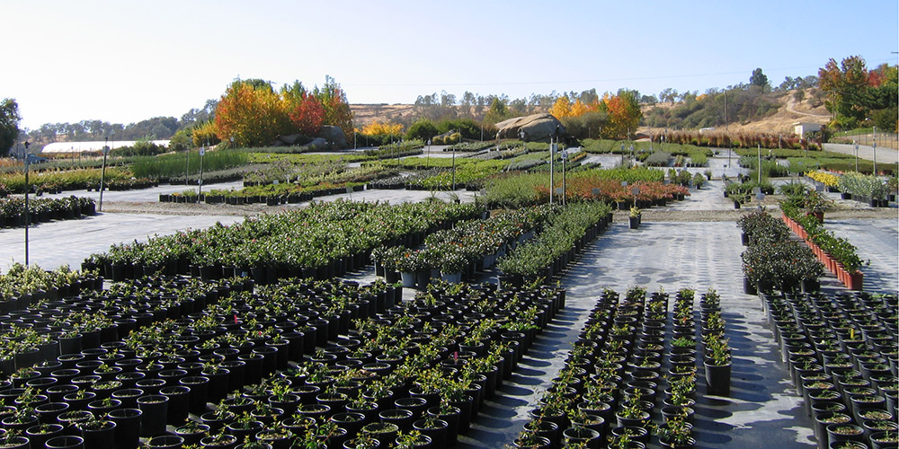 Contract Growing For Habitat Restoration And Landscape Horticulture